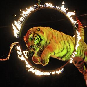Цирки Магнитогорска