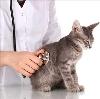 Ветеринарные клиники в Магнитогорске